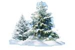 Cây Thông Noel đã tách nền file  PNG và PSD